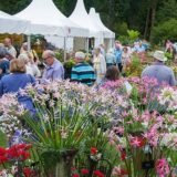 https://www.basingstokefestival.co.uk/wp-content/uploads/2018/05/flowers-e1527079227675-160x160.jpg